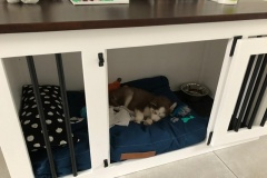 Houten-hondenbench-1-deurs-in-wit-met-een-bruin-bovenblad-en-met-zwarte-beslag-en-spijlen